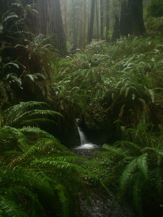 Fern Canyon is located in Prairie Creek Redwoods State Park. If you care for a longer stroll than the short jaunt up the canyon, there is plenty to explore.