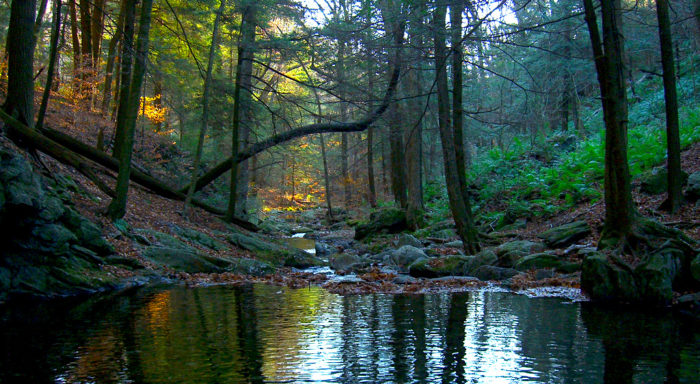 Located along our border with Connecticut near Sheffield, Sages Ravine is part of the Appalachian trail.