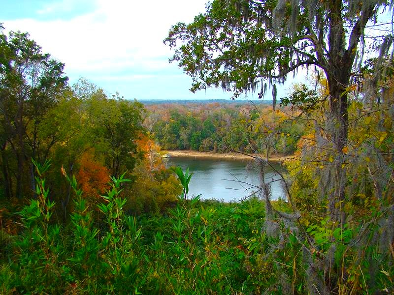 Torreya State Park Might Have The Most Scenic View In Florida