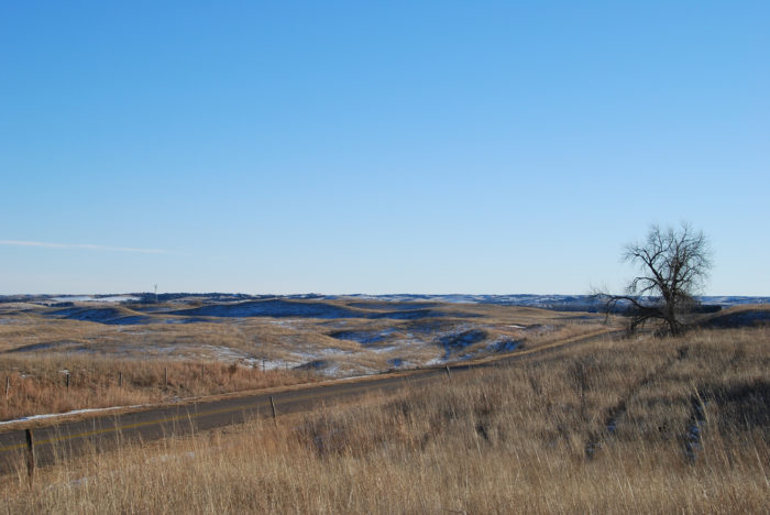 Ecologically speaking, the Sandhills region is an absolute treasure.