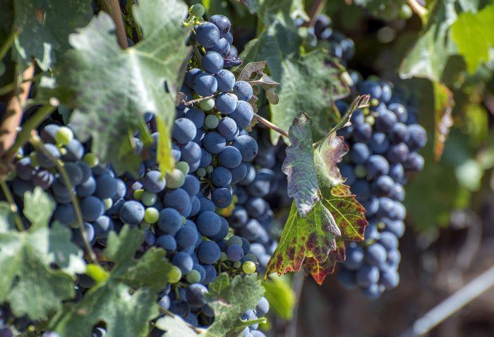 ...visiting a local vineyard...