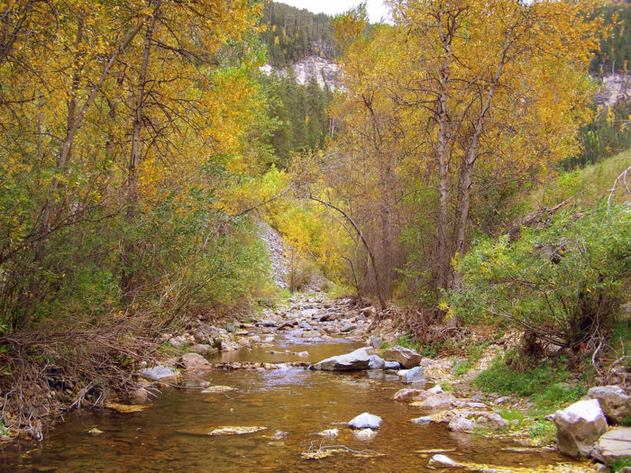 Following the Spearfish Canyon Scenic Byway will take you next to some of the Black Hills' most gorgeous features.