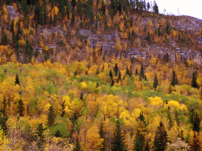 The Spearfish Canyon surrounding the town is full of gorgeous views like this.