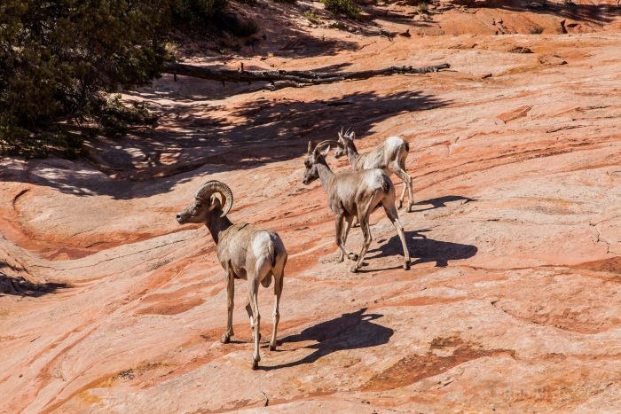 Watch for wildlife! If you're lucky, you'll catch a glimpse of a bighorn sheep or two.