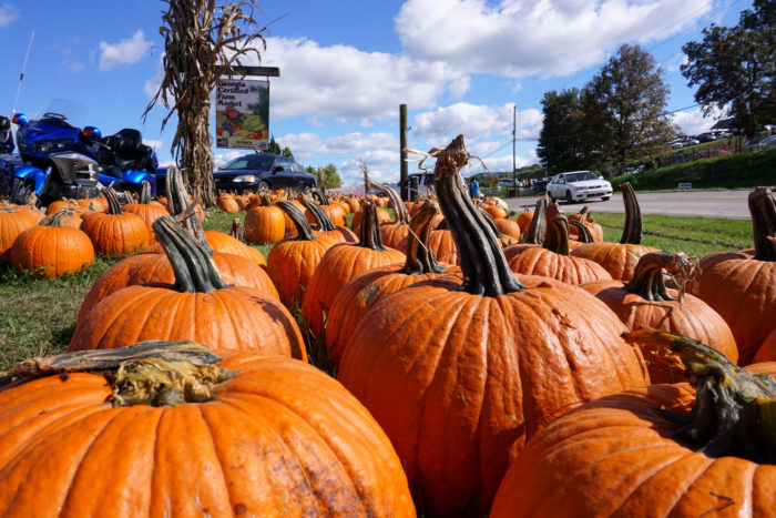 There are tons of farms and orchards located in Ellijay, perfect for you to snag some autumn treats!