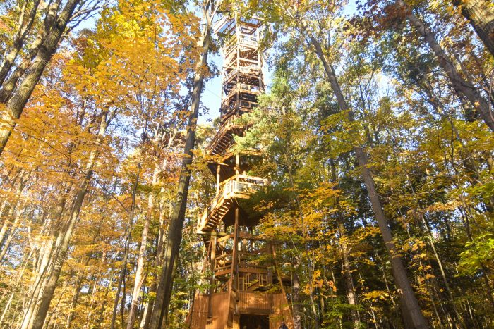 The nearby Kalberer Family Emergent Tower takes you up 120 ft. above the trees, where you can see for miles and miles.