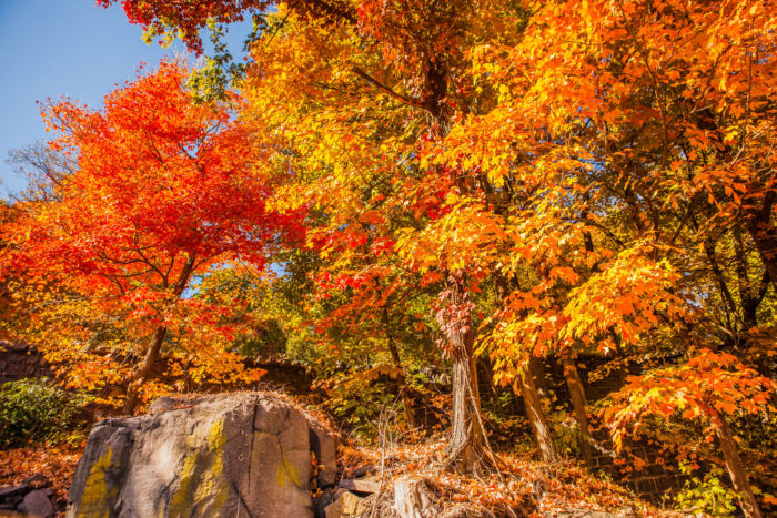 New Jersey has the distinction of being the location that has the latest start to the foliage season.