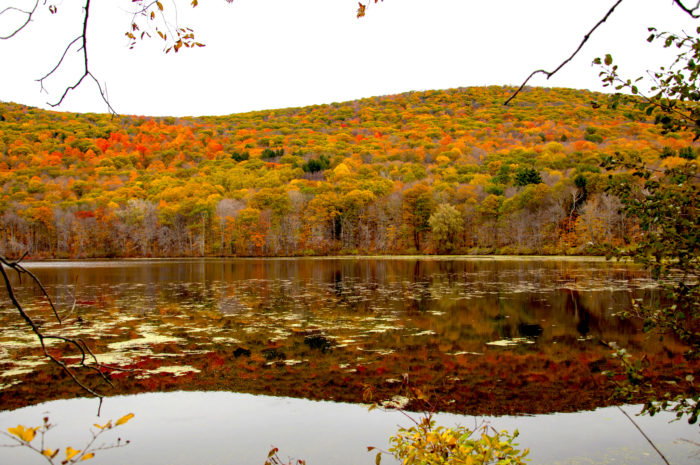 October Mountain is the largest state forest in all of Massachusetts. It offers over 16,400 acres of explorable terrain.
