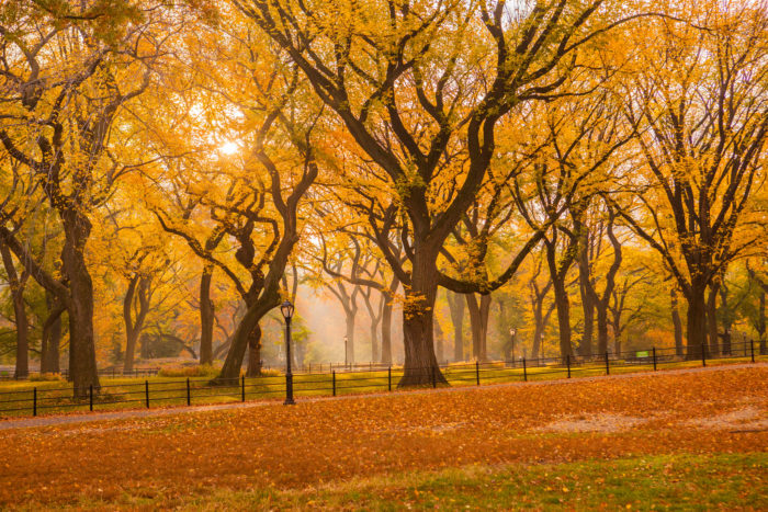 An enchanting canopy made up of rows of breathtaking trees, The Mall is known for having the one of the largest amounts of remaining American Elms in all of North America.