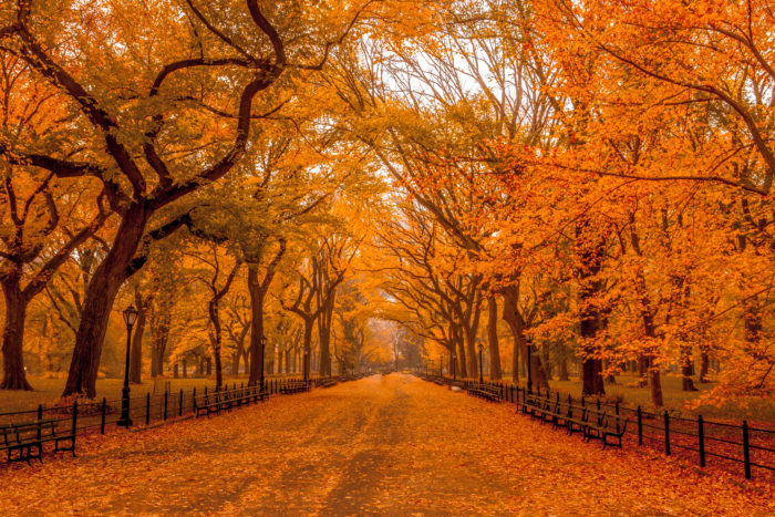 Located within Central Park like so many of our city's treasures, you can take a stroll through a tunnel of trees at The Mall.