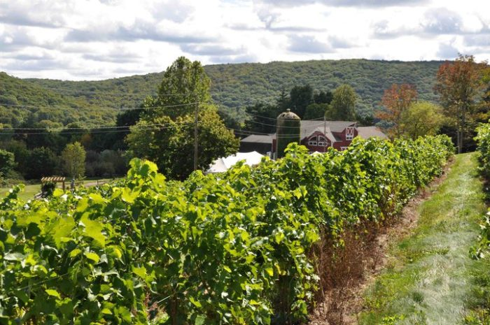 This trail will make you feel like a kid again! You'll be on an adults only adventure, collecting stamps, sampling cheese, and getting lost in the endless rows of vineyards. You won't believe how much you'll have as you drive from winery to winery.