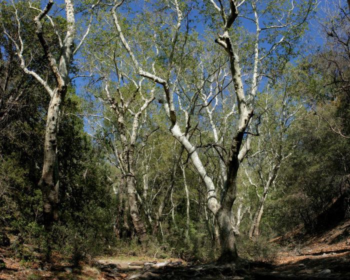 2. Bog-Kent Springs Loop (Santa Rita Mountains)