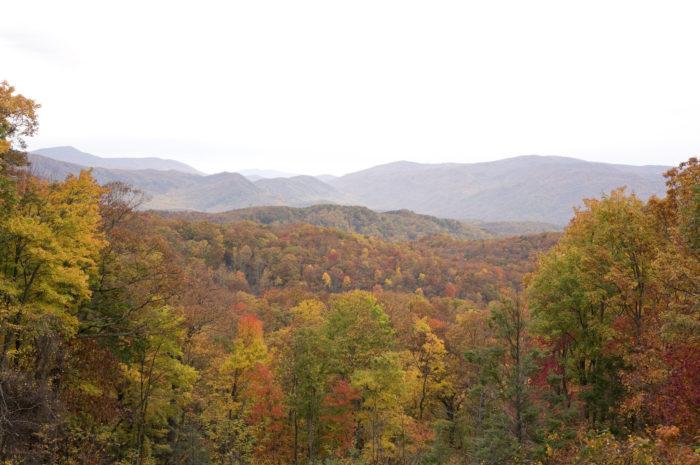 5. Roaring Fork Trail