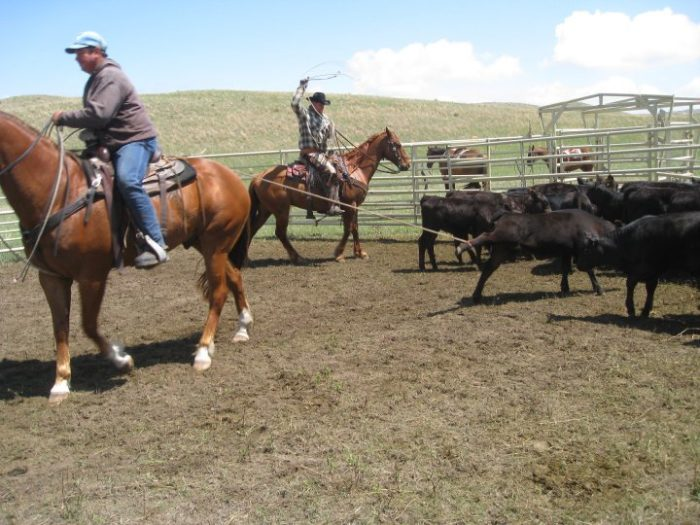 If you choose, you can participate in ranch adventures that include everything from checking fences to branding cattle.