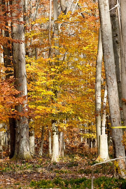 Fall is here, and the trees are turning colors at the Timberline Resort.