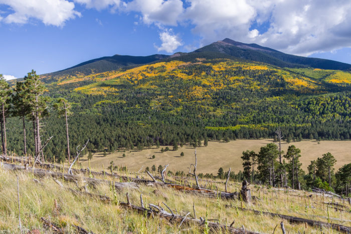But perhaps the best part about fall in Flag are the mountains just a stone's throw away. The Peaks and Mount Elden, with their collection of ponderosa pines and aspens, give a beautiful dappled effect from near and far.