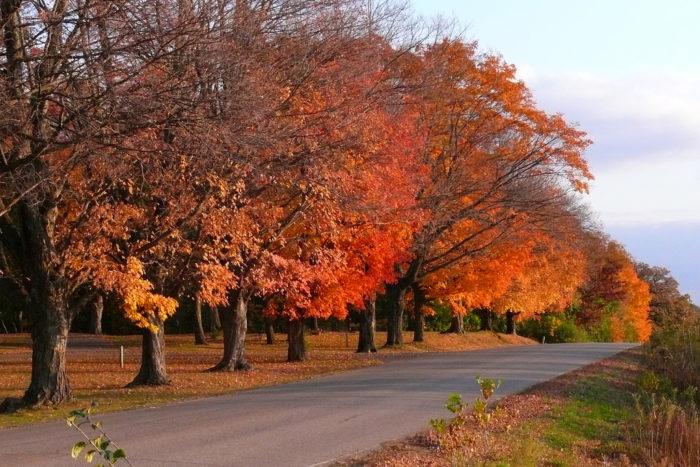 5. Spring Creek Road in Northfield