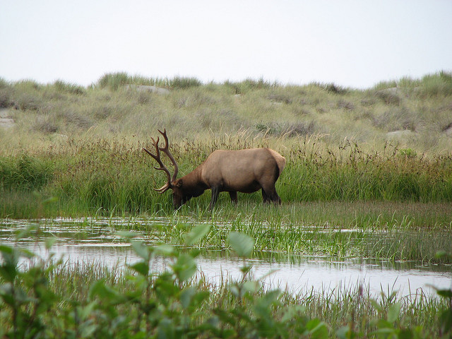 The Prairie Creek Redwoods State Park is also home to amazing wildlife.