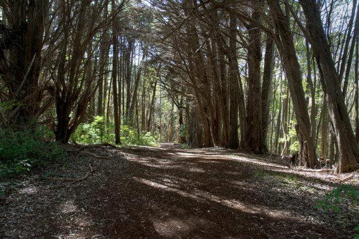 3. Waihou Spring Trail, 1.4 miles