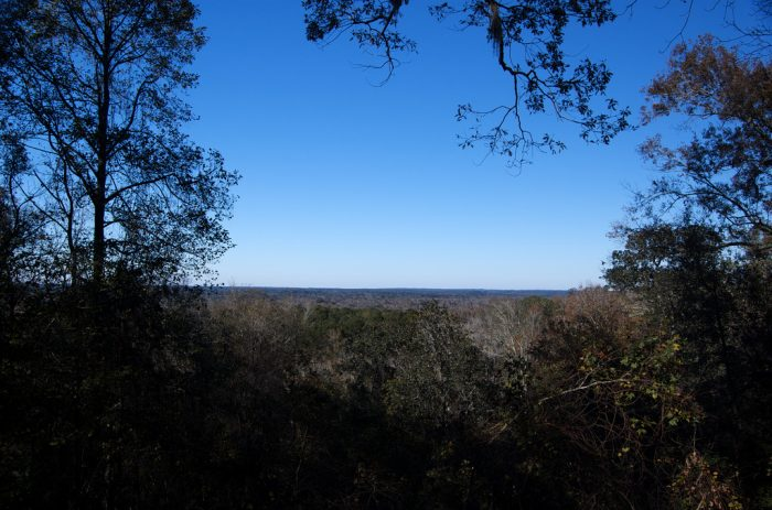 Welcome to Torreya State Park in Bristol. This park in the Panhandle has scenic overlooks where you can see for miles on a clear day.