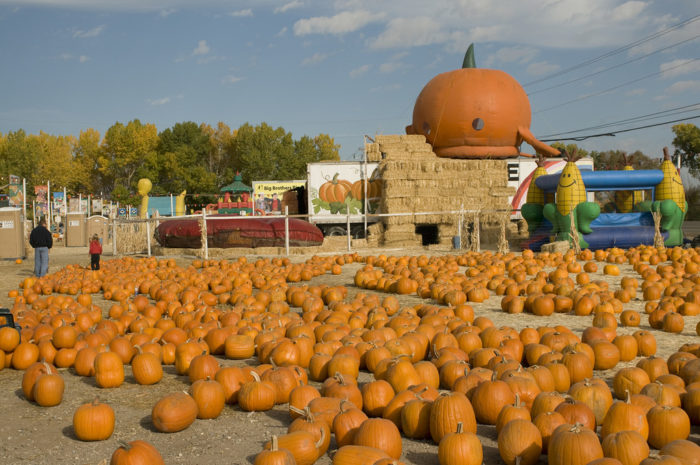 10. Toll House Pumpkin Patch – 12185 S Virginia Street, Reno