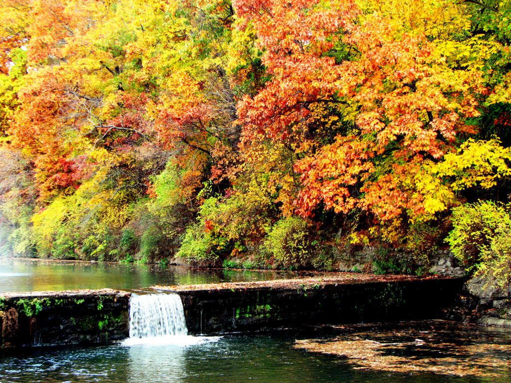 12 Arkansas Forests You Need To Explore In The Fall