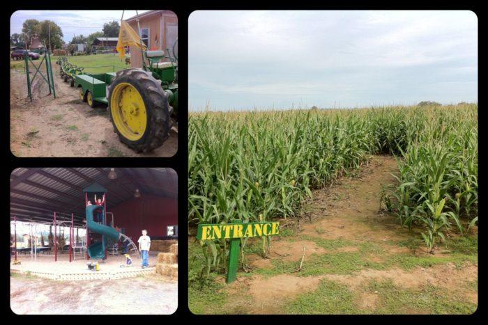 4. Corn Maze at Lollie (Mayflower)