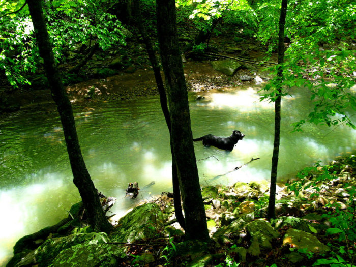 The Ozark Highlands Trail mostly crosses through the Ozark National Forest, and it runs alongside a number of creeks, ponds, and pools.