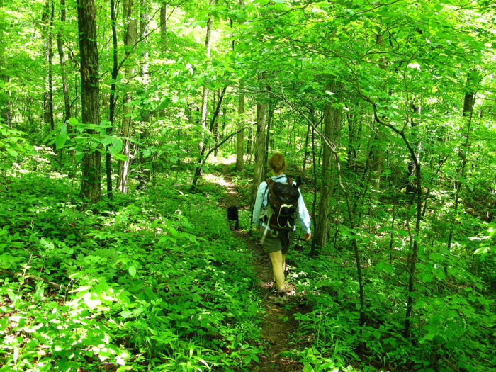 No matter which leg of the trail you choose, or which season you choose to do it in, the entirety of the trail is a nature lover's dream.