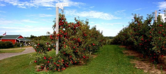 You might have heard of Crane Orchards, which offers apple picking, a corn maze, and all sorts of all activities just steps away from the restaurant.