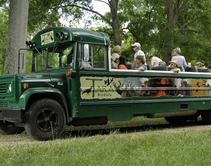 Another great way to explore Tara is by taking a tour on the Open Air Wildlife Watching Bus.