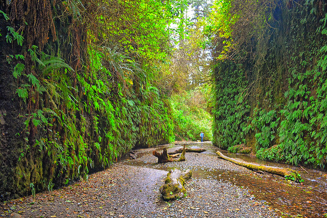 Fern Canyon itself is a lush green tunnel into the forest.