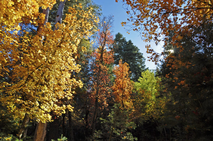 5. Horton Creek Trail #285 (Mogollon Rim)