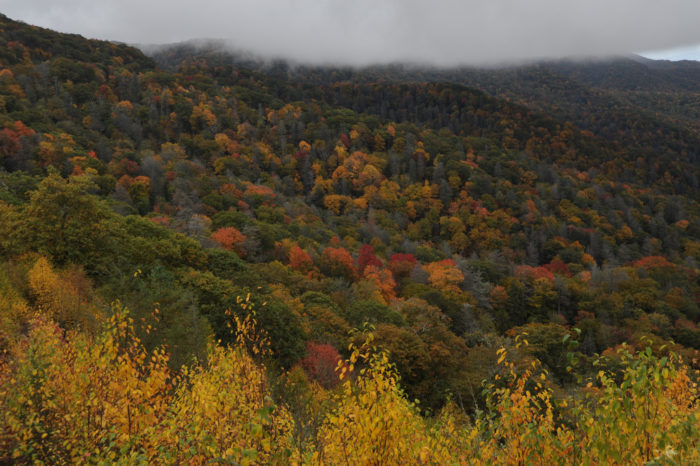 5. The Great Smoky Mountains set their colors on fire.