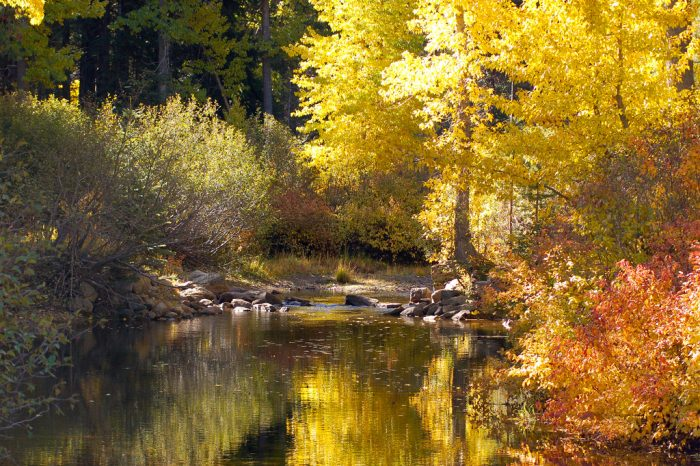 Visit Truckee in the fall and be rewarded with stunning views of quaking aspens reflecting on the river.