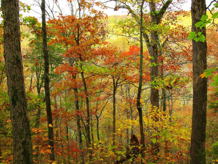 But there's no time like the present, and fall is an ideal season to spend your time in the woods.