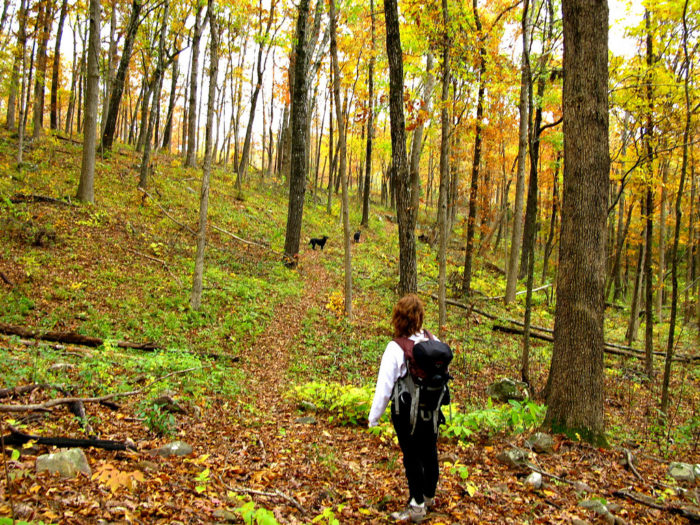 8. The forest along the Ozark Highlands Trail