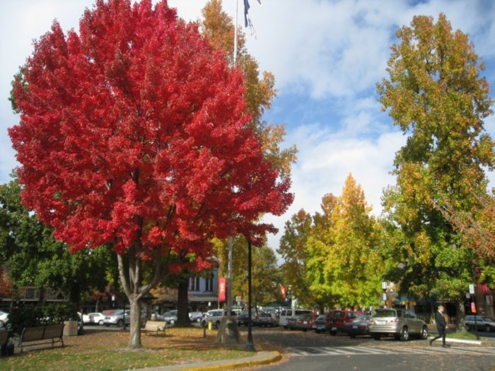 The tree-lined streets are absolutely enchanting this time of year.