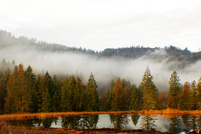 Nestled along the Clearwater River, hints of early fall start along the water's edge...