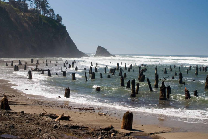 The Haunting Neskowin Ghost Forest In Oregon
