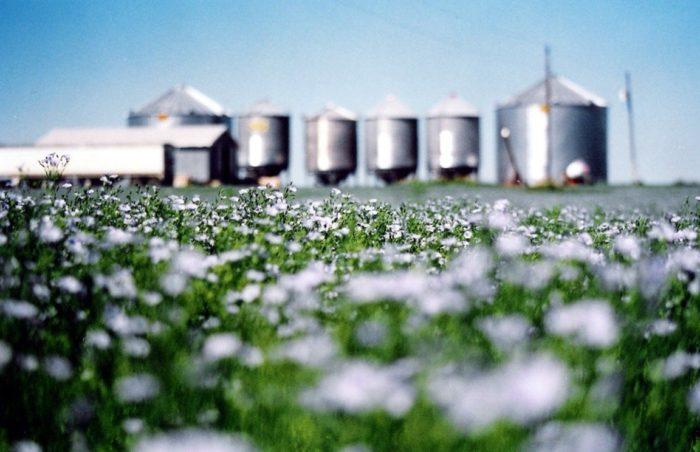 3. ... Flaxseed...