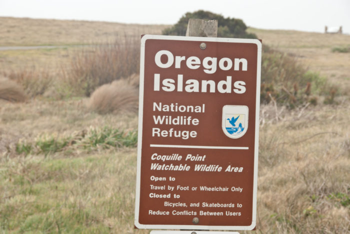 It's also one of the best places to view the Oregon Islands Wildlife Refuge, which is a wildlife sanctuary comprised of more than  1,000 small islands off the coast of Oregon. Puffins, sea lions, seals, and other animals make up the populations of these lovely islands, which can be viewed from many spots on Coquille Point.