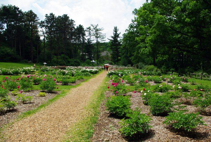 1. Nichols Arboretum (Ann Arbor)