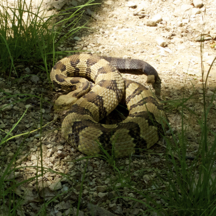 10. Finally, watch where you are going because we have our fair share of rattlesnakes...