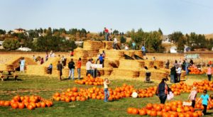 These 5 Charming Pumpkin Patches Are Picture Perfect For A Fall Day