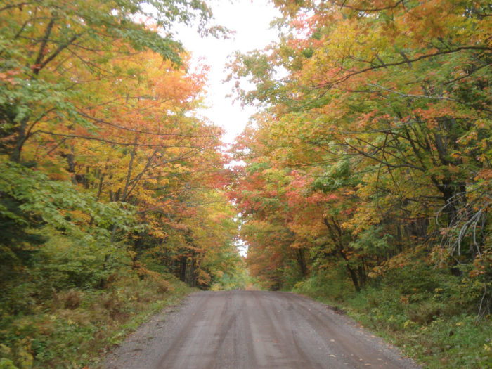 1. Forest Road 166