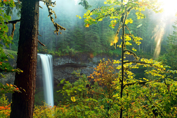 The beautiful Silver Falls State Park is an autumnal wonderland.