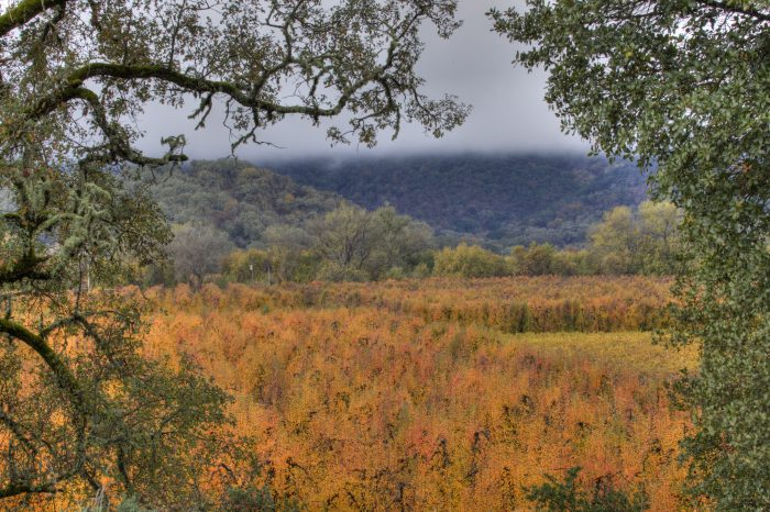 If you're lucky you may even start to see some real  fall colors in Ukiah!