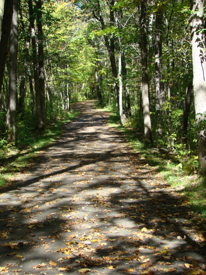 7. River Trail in Wild River State Park - 1.5 miles