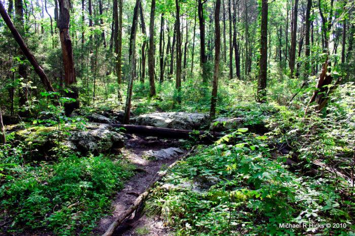 1. Cedars of Lebanon State Park